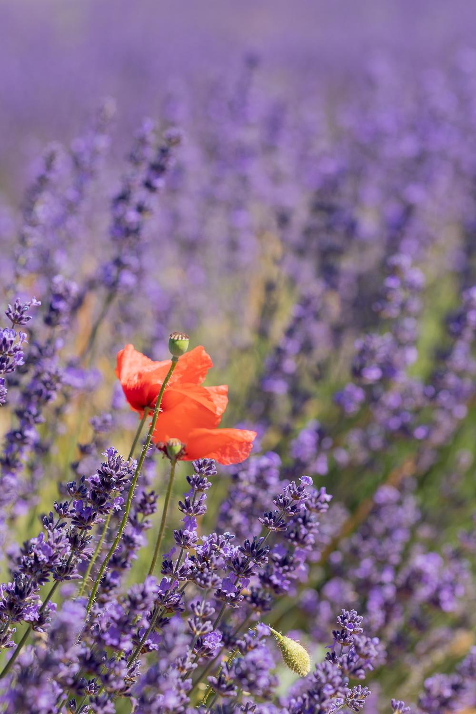 Photographe Provence